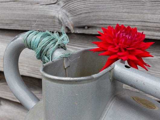 Watering cans at Great Dixter, always a great photo op.