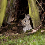 Baby rabbit in the 'Ghyll'